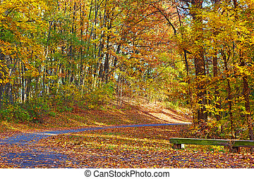 Colorful foliage of deciduous trees along the park trail. A walkway in autumn at The National Arboretum, Washington DC.
