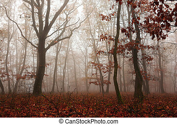 colorful forest in autumn season