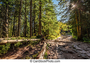 Colorful forest in Tatra mountains at sunrise in autumn