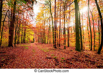 Colorful forest in the fall in Poland, Europe