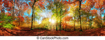 Colorful forest panorama with the sun in autumn