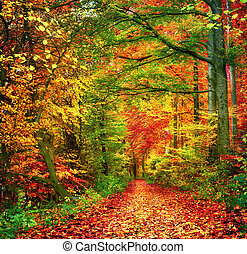 Colorful forest scene in autumn