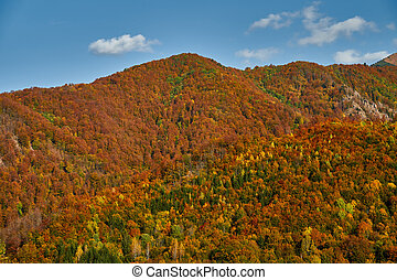 Colorful forests on the mountains