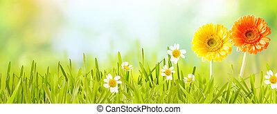 Colorful fresh panoramic spring banner