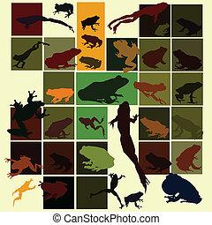 Colorful frog set