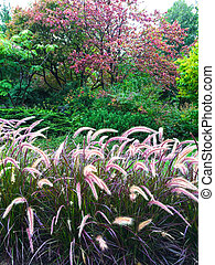 Colorful garden with ornamental grass
