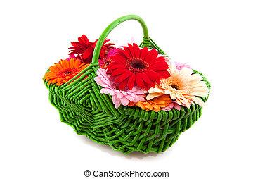 Colorful Gerber in green basket
