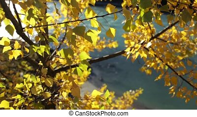 Colorful Golden Autumn Leaves
