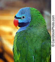Colorful green parrot with blue head close up