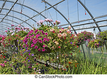 Colorful hanging flower basket on display