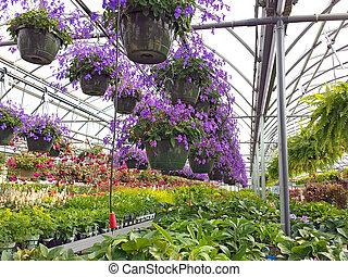 colorful hanging pots - Colorful hanging pots in a...
