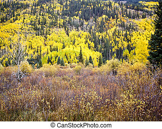 Colorful hillside in Fall