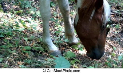 Colorful horse eats dry grass in mountain desert - Colorful...