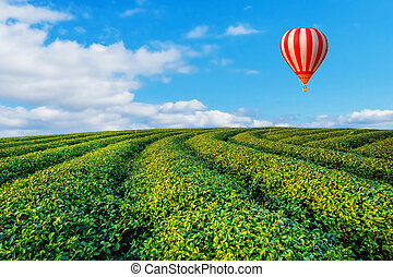 Colorful hot-air balloons flying over tea plantation landscape at sunset