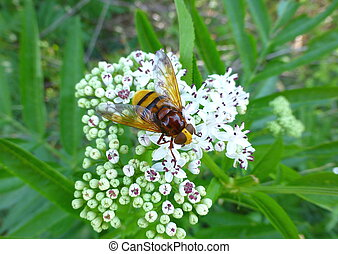 Colorful hoverfly sitting on a flower