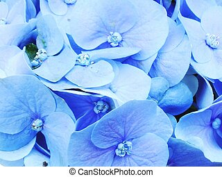 colorful hydrangea flower bouquet close up