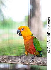 Colorful jandaya conure