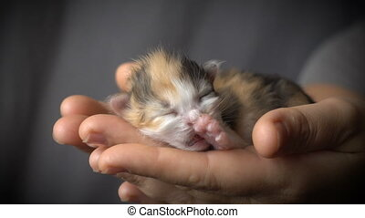 colorful kitten in woman hands - Adorable colorful newborn...