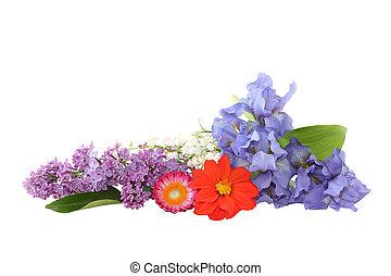 colorful květovat