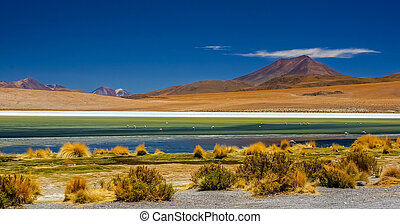 Colorful lagoon in Atacama