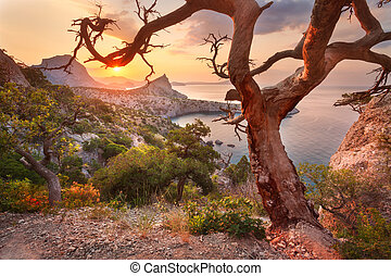 Colorful landscape. Sunrise in mountains with old tree. Sunny morning