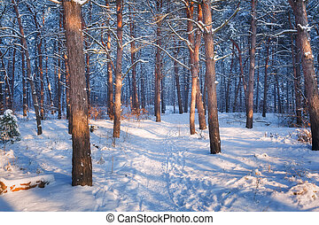 Colorful landscape with snowy trees and trail