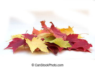 a small pile of colorful autumn leaves