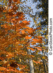 Colorful leaves 1