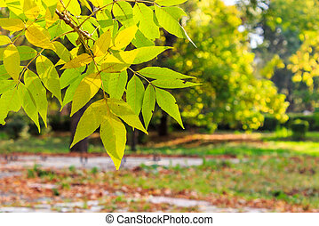 colorful leaves close-up on a blury autumn city park...