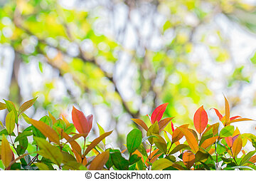 Colorful leaves.
