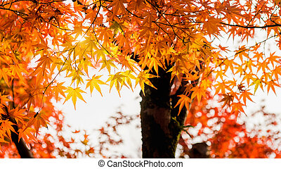 Colorful leaves in autumn.