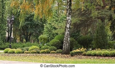 Colorful leaves in the autumn in the park - Leaf fall in the...