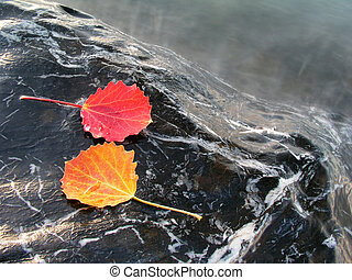 Colorful leaves isolated on stone