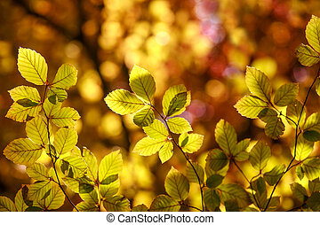 Colorful leaves of trees in autumn sunlight beauty nature background