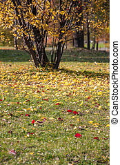 Colorful leaves on grass