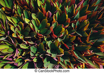 colorful leaves plant background, top view