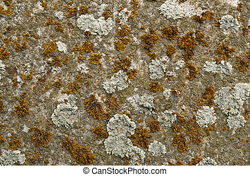 Colorful lichen on a rock in Iceland. Natural background ...
