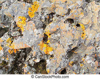 Colorful Lichens on Rocky surface Background