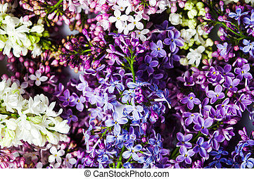 Colorful lilac flowers arrangement close up