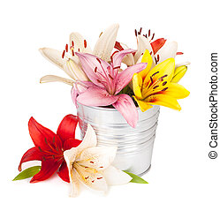 Colorful lily flowers in bucket. Isolated on white background