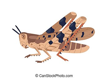 Colorful locust vector illustration. Wild winged insect isolated on white background. Parasite or agricultural plague. Huge creature harvest decimating. Bug threatening seasonal plant.