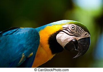 Colorful macaw parrot - Closeup of a beautiful colorful ...