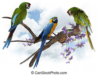 Macaw Parrots Perching - Colorful Macaw Parrots Perching On ...