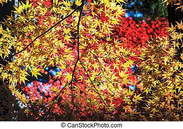 Colorful maple leaf