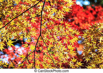 Colorful maple leaf for adv or others purpose use