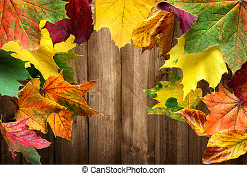 Colorful maple leaves and wood background