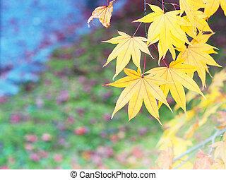 colorful maple leaves on early autumn season.