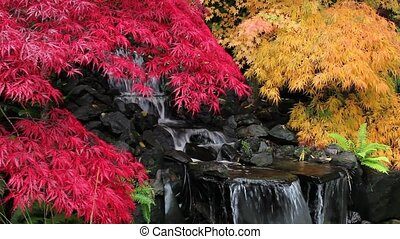Colorful Maple Trees and Waterfall