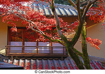 colorful maple with roof