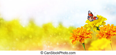 Colorful marigold on the background of the summer landscape. butterfly on a flower